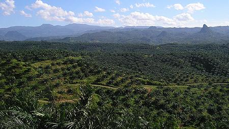 Treibstoff statt Nahrung: Palmölplantage in Indonesien