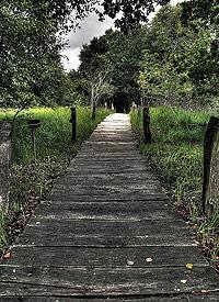 Auf dem Holzweg © Dennis Knake